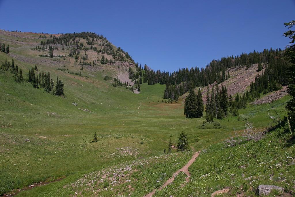 Coal Creek Meadows