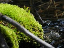 green-moss
