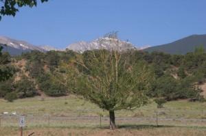 View from Camper Window - Collegiate Peaks
